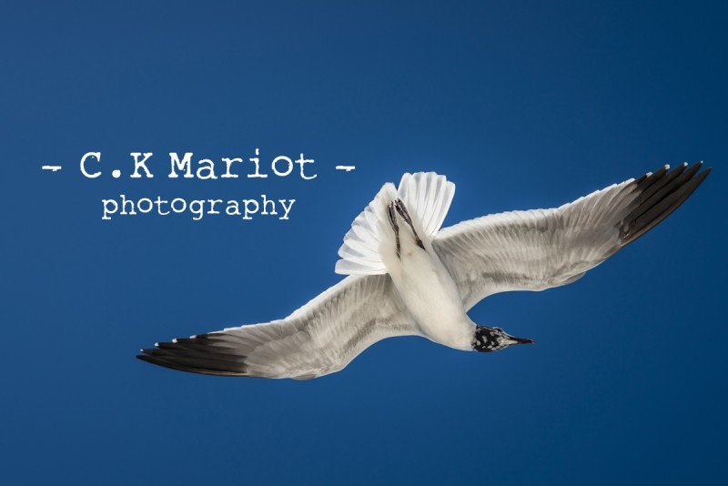 CK-Mariot-Photography-1642