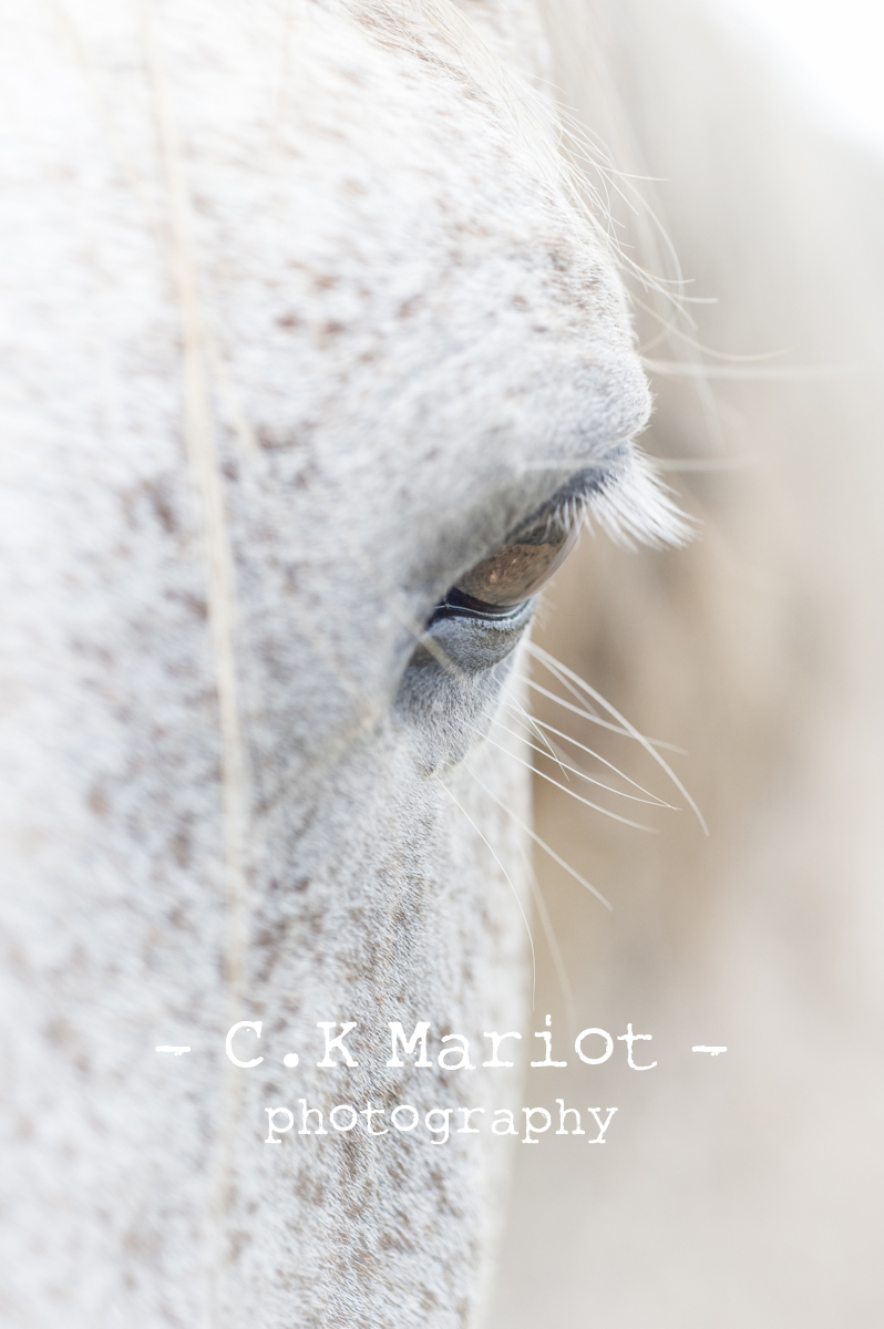 CK-Mariot-Photography-4614
