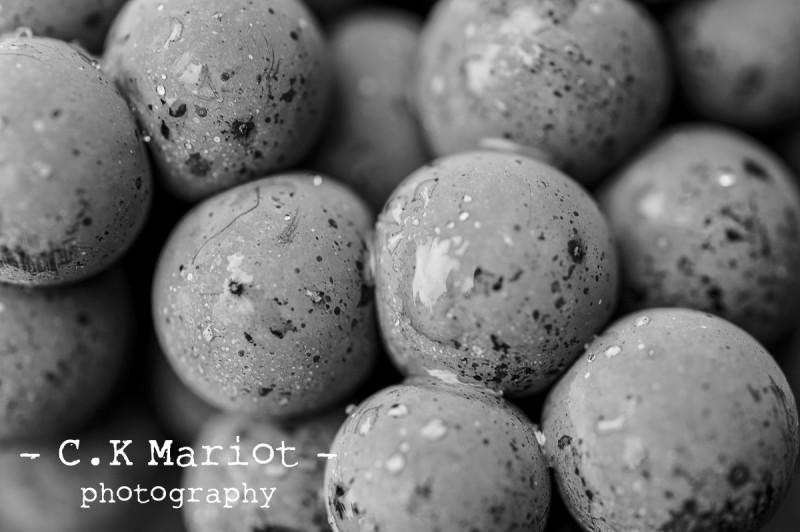 CK-Mariot-Photography-black-0634