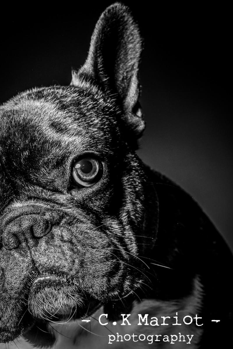 CK-Mariot-Photography-black-0922
