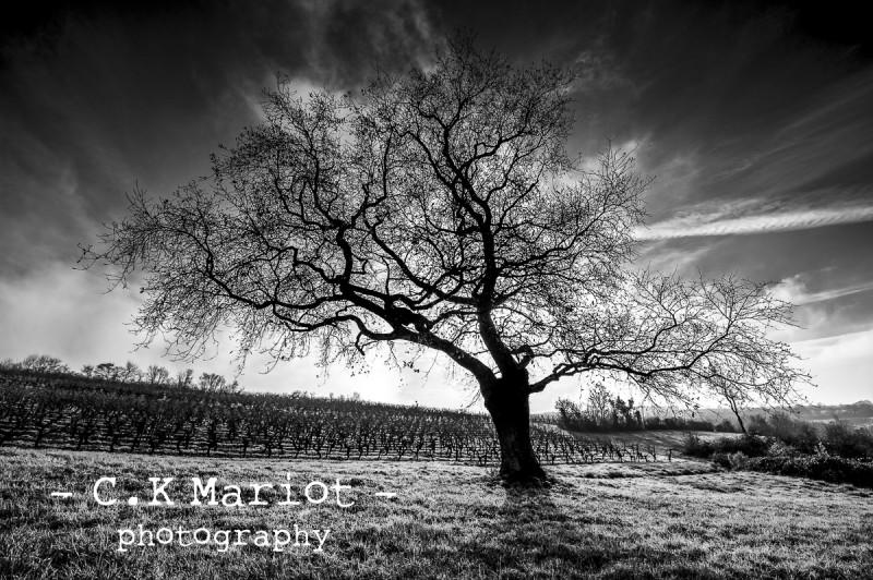CK-Mariot-Photography-black-4439